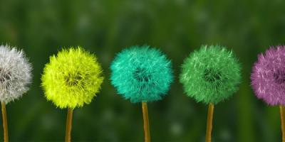 Разноцветные одуванчики